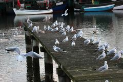 Pier With Gulls Royalty Free Stock Images