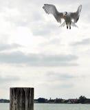 Pier-Landung Lizenzfreies Stockbild