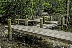 A pier that leads to a path in the woods Royalty Free Stock Images