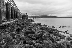 Pier At Low Tide 3. A view of the pier in Des Moines, Washington at low tide Royalty Free Stock Photo