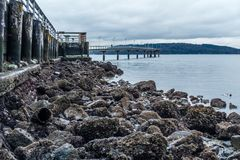 Pier At Low Tide 2. A view of the pier in Des Moines, Washington at low tide Royalty Free Stock Image