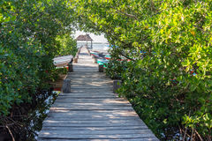 Pier and Mangroves in Mexico Royalty Free Stock Images