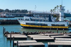 Pier 39 marina with yachts and people walking around. Sea lions on a wooden pontoon. Crowded Pier 39 in San Francisco USA Royalty Free Stock Photo
