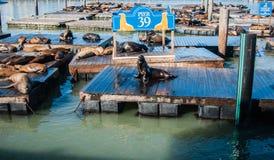 Pier 39 mit Seelöwen Stockfoto