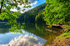 Pier on mountain lake in forest. Cloud reflection on Synevyr mountain lake in forest royalty free stock photography