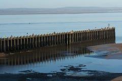 Pier op de overzeese kust stock afbeeldingen
