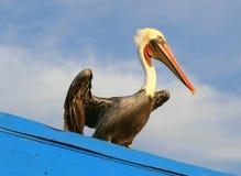 Pier-Pelikan Lizenzfreie Stockfotografie