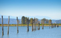 Pier pilings Royalty Free Stock Photos