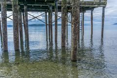 Pier Pilings At Low Tide 5 stockbilder