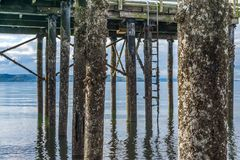 Pier Pilings At Low Tide 4 lizenzfreie stockbilder