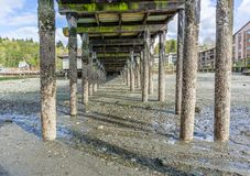 Pier Pilings At Low Tide 6 stockfoto