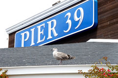 Pier 39 Plate with a Bird Stock Photos