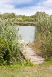 Pier in reeds Royalty Free Stock Photography