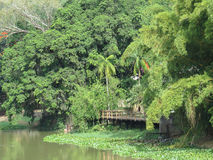 Pier on the river bank in forest. View of the pier on the bank of the river in rain forest, on sunny day Royalty Free Stock Images
