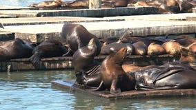 Pier 39, San Francisco stock footage