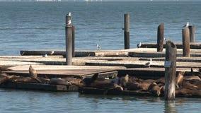 Pier 39, San Francisco stock video footage