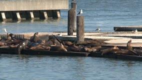 Pier 39, San Francisco stock video