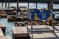 Pier 39 in San Francisco Royalty Free Stock Photo