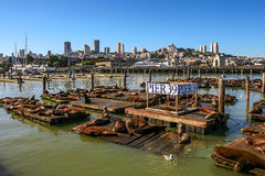 Pier 39 in San Francisco, USA. Stock Images