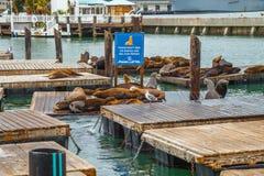 Pier 39 Sea lions Royalty Free Stock Photos