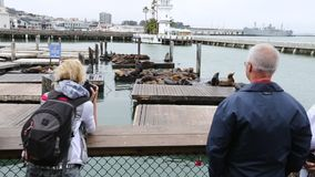 Pier 39 Sea Lions stock video footage