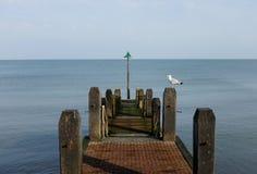 Pier. A pier with a seagull stock photos