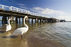 The pier in Sopot with swan. The pier in city Sopot - Poland Stock Images