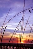 pier trawy Fotografia Stock