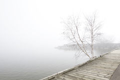 Pier and white birch trees on foggy lake Royalty Free Stock Photos