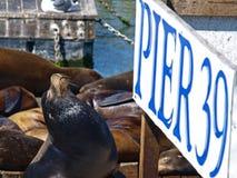 PIER39 von San Francisco Lizenzfreie Stockfotografie