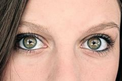 Piercing Eyes Straight On Royalty Free Stock Photo