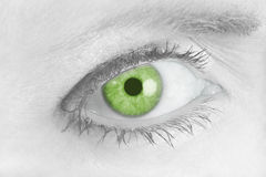 Piercing Green Eye Stock Photography