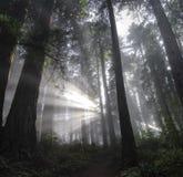Piercing Licht Lizenzfreies Stockfoto