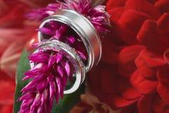 pierścionków target2631_1_ Zdjęcie Royalty Free