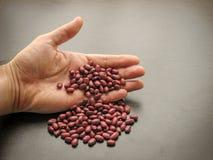 Pierda para arriba de las semillas secadas de la haba roja a disposición imagen de archivo