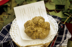 Piermont truffle Stock Photo