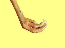 pierna Imagen de archivo