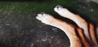 Pierna de dos perros en el piso sucio negro con el espacio de la copia fotografía de archivo libre de regalías