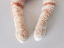 Pierna del gato Imagenes de archivo