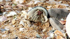 Piernas animales de la cáscara de la playa del cangrejo almacen de metraje de vídeo