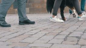 Piernas de la gente y del perro de la muchedumbre que caminan en el paso de peatones en la cámara lenta metrajes