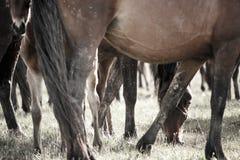 Piernas de los caballos fotografía de archivo