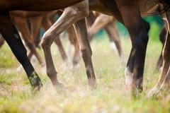 Piernas de los caballos en verano Fotos de archivo libres de regalías