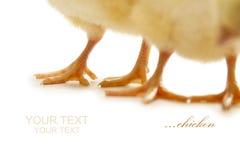 Piernas de pollo Imagen de archivo