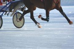 Piernas de un caballo del trotón en el movimiento Caballo Racing detalles Fotos de archivo