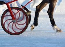 Piernas de un caballo del trotón y de un arnés del caballo detalles Fotografía de archivo