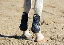Piernas de un caballo de los deportes Deporte ecuestre en detalles Fotos de archivo libres de regalías