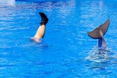 Piernas de una mujer y de una cola de un delfín en la piscina Fotografía de archivo
