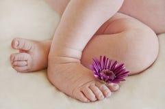 Piernas del bebé con el pie que sostiene la flor púrpura Imagen de archivo libre de regalías