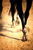 Piernas del caballo Fotografía de archivo libre de regalías